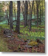 Path To The Daffodils Metal Print by Bill Wakeley