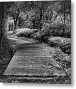Path To The Forest Metal Print