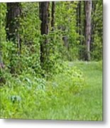 Path To The Green Forest Metal Print