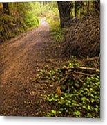 Pathway In The Woods Metal Print