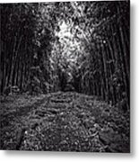 Pathway Through A Bamboo Forest Maui Hawaii Metal Print