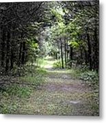 Pathway Through The Forest Metal Print