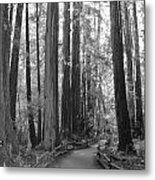 Pathway Through The Trees Metal Print