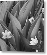 Pattern Of Flowers And Leaves - Monochrome Metal Print