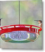 Peace At The Feeder Metal Print