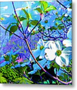 Peaceful Dogwood Spring Metal Print