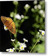 Peaceful Forest Metal Print
