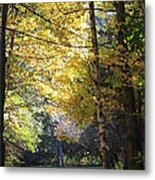 Peaceful Path Metal Print by Kathy DesJardins