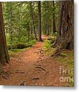 Peaceful Path To Cheakamus Lake Metal Print