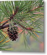 Peaceful Pinecone Metal Print by Stephen Melcher