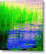Peaceful Stream  Quebec Landscape Art Tall Grasses At The Lakeshore Waterscene Carole Spandau Metal Print