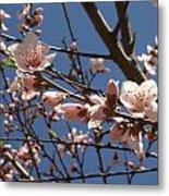 Peach Blossoms Metal Print