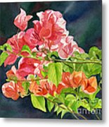 Peach Colored Bougainvillea With Dark Background Metal Print by Sharon Freeman