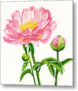 Peach Colored Peony With Buds Metal Print