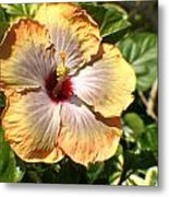 Peach Flower Metal Print