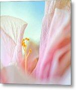 Peach Hibiscus. Macro Metal Print by Jenny Rainbow