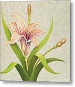 Peach Lily Metal Print by Carol Sabo