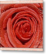 Peach Love Rose Metal Print