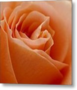 Peach Rose Metal Print