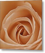 Peach Rose Metal Print by Lesley Rigg