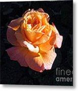 Peach Rose Palm Desert Metal Print