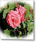 Peach Rose Metal Print by Victoria Sheldon