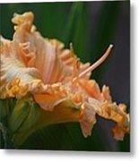 Peach Rufflette - Lily Metal Print