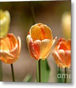 Peaches And Cream Metal Print