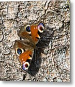 Peacock Butterfly Metal Print by Frits Selier