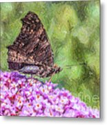 Peacock Butterfly Inachis Io On Buddleja Metal Print