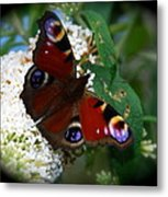 Peacock Butterfly Metal Print