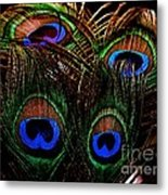 Peacock Eye Feathers Metal Print