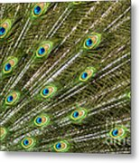 Peacock Feather Abstract Pattern Metal Print