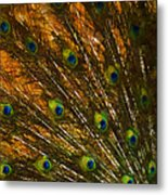 Peacock Feathers 2 Metal Print