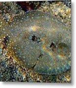Peacock Flounder Metal Print