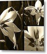 Peacock Gladiolus Triptych Metal Print