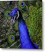 Peacock Head And Tail Metal Print