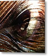 Peacock I Metal Print