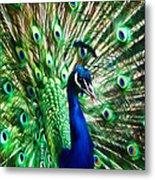 Peacock - Impressions Metal Print