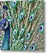 Peacock Metal Print by Karen Walzer