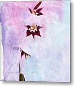 Peacock Orchids Metal Print