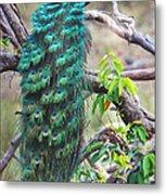 Peacock Perching On A Branch, Kanha Metal Print