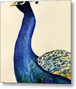 Peacock Portait Metal Print by Prashant Shah