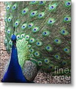 Peacock Up Close Metal Print