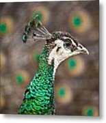 Peahen And Peacock Metal Print