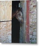 Peak A Book Horse Metal Print