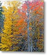 Peak And Past Foliage Metal Print