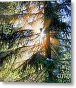 Peeking Through God's Shadow Metal Print