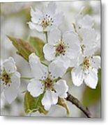 Pear Tree White Flower Blossoms Metal Print