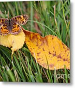 Pearl Crescent Butterfly On Yellow Leaf Metal Print